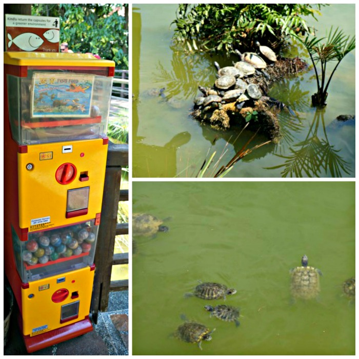 Collage tortues