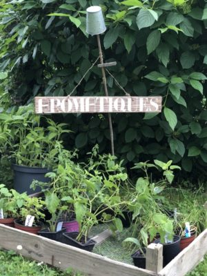 Troc de plantes